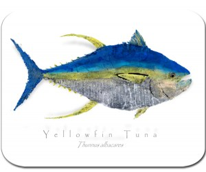 Yellowfin Tuna on white board